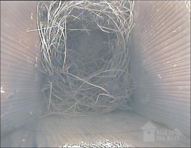 Nest inside Box 3 as of 1st April 2021