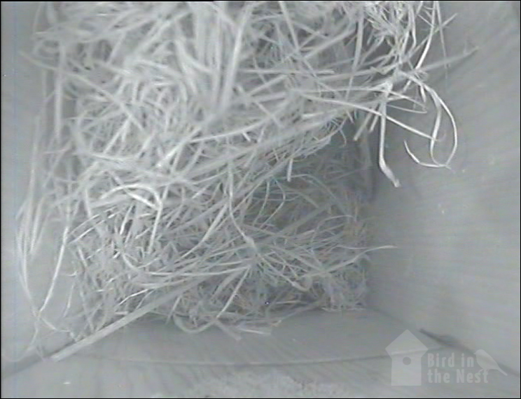 Nest inside Box 3 as of 5th April 2021